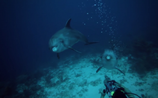 Underwater footage shot for Jack Hanna's Into the Wild from Curacao.